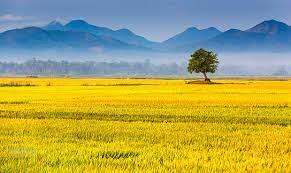 Mơ thấy cánh đồng