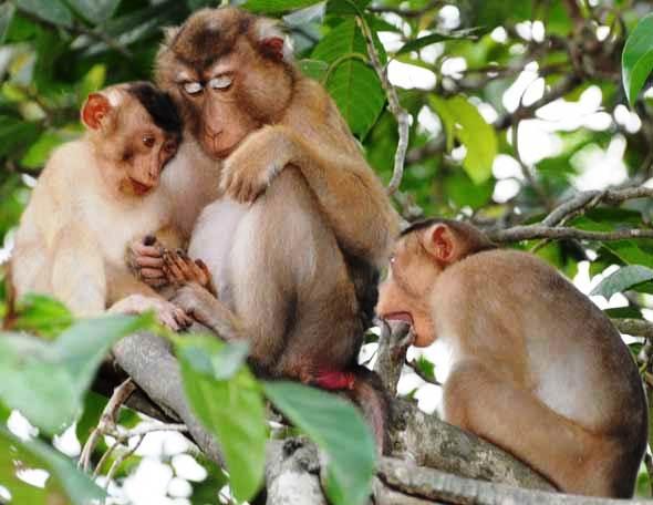 nằm mơ thấy con khỉ